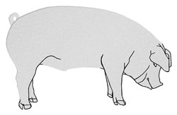 White Pig embroidery design