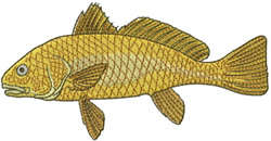 Red Drum Fish embroidery design