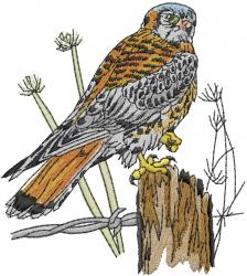 American Kestrel embroidery design