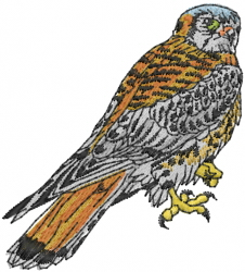 American Kestrel embroidery design