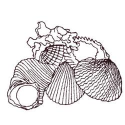 Seashells Outline embroidery design