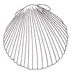 Seashell Outline embroidery design