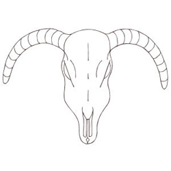 Longhorn Skull Outline embroidery design