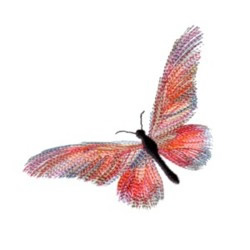 Variegated Butterfly embroidery design