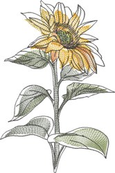 Watercolor Sunflower embroidery design