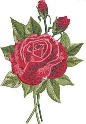 Beautiful Rose embroidery design