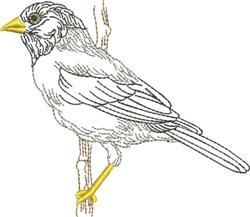 Sketched Robin embroidery design