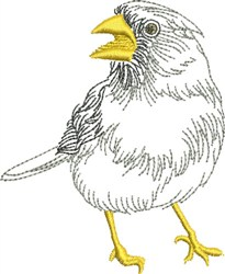 Sketched Jay Bird embroidery design
