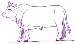 Bull Outline embroidery design