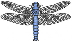 Dragonfly 15 embroidery design