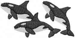 Three Killer Whales embroidery design