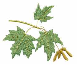 West Virginia -  Maple embroidery design