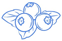 Blueberry Outline embroidery design