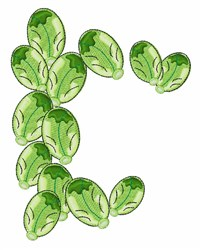 Brussel Sprouts embroidery design