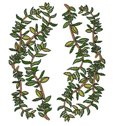 Thyme Vines embroidery design